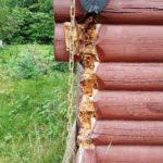 Behov for rehabilitering av tømmerhjørne